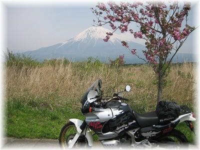 富士と八重桜